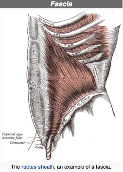 An example of fascia