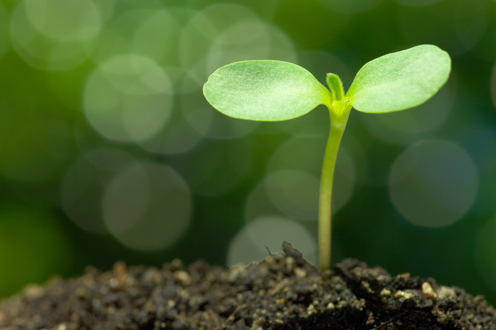 Growing plant sprout
